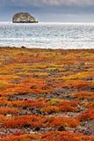 Vista de Roca Gordon de la isla del sur de la plaza Imagen de archivo libre de regalías