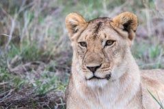 Vista de Serengeti Imagen de archivo libre de regalías