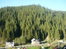 Vista de surpresa da floresta do monte fotografia de stock