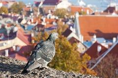 Vista de Tallinn, Estonia Fotografía de archivo