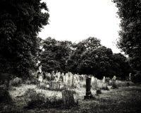 Vista de um cemitério crescido excedente Fotos de Stock