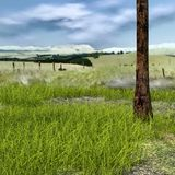 Vista de um gramado pequeno com abundância da grama, vale fotos de stock royalty free