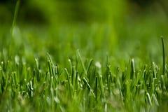 Vista de um gramado verde imagem de stock
