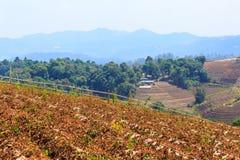 Vista de um jardim na parte superior de uma montanha Fotografia de Stock Royalty Free