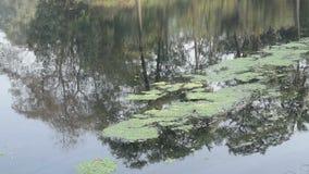 Vista de um lago agradável video estoque