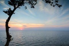Vista de um mar com a árvore no por do sol Fotos de Stock