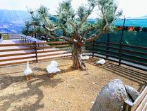 Vista de um parque na montagem Líbano Imagens de Stock
