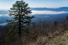 Vista de um pinheiro e de um vale nevoento foto de stock royalty free