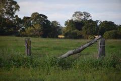 Vista de um prado Fotos de Stock Royalty Free