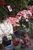 Vista de um quiosque do florista foto de stock