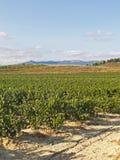 Vista de um wineyard em La Rioja, Espanha Indústria de vinho foto de stock