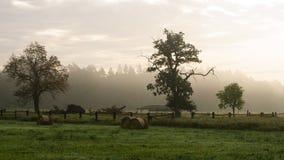 Vista de uma árvore na manhã Fotos de Stock Royalty Free