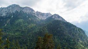 Vista de uma altura a uma cordilheira com árvores coníferas Imagens de Stock Royalty Free