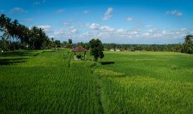 Vista de uma cabana pequena nos arroz-campos em Ubud, Bali, Indonésia fotografia de stock royalty free
