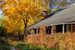 Vista de uma casa de madeira coberta com os arvoredos e a folha amarela do bordo no outono fotografia de stock