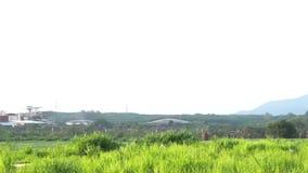 Vista de uma f?brica qu?mica com chamin?s de fumo no meio de um campo verde do arroz no amanhecer ~ pollutin das tubula??es da f? vídeos de arquivo