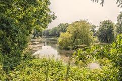 Vista de uma floresta bonita fotos de stock royalty free