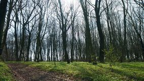 Vista de uma floresta da mola em um dia ensolarado com campo video estoque