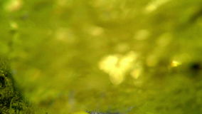 Vista de uma parte inferior de uma cubeta plástica em que o homem derrama a água de um poço vídeos de arquivo
