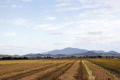 Vista de uma terra agrícola. Imagem de Stock