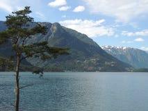 Vista de un árbol, apoyada por una montaña nevosa Fotos de archivo