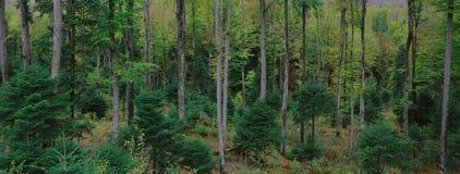 Vista de un bosque Imágenes de archivo libres de regalías