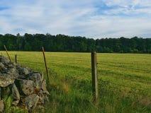 Vista de un campo del verano Fotografía de archivo libre de regalías