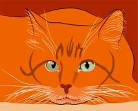 Vista de un cazador pelirrojo del gato Imagen de archivo