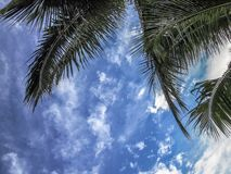 Vista de un cielo azul con las nubes y las hojas blancas de una palmera fotos de archivo