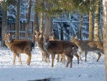 Vista de un ciervo Imagenes de archivo