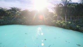 Vista de un lago hermoso con los pescados hermosos en una isla perdida tropical Naturaleza hermosa, palmeras, insectos metrajes