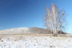 Vista de una colina Bald cubierto con la nieve, Siberia, Rusia Fotografía de archivo libre de regalías