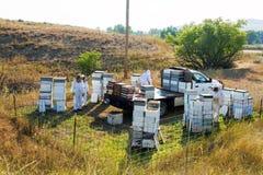 Vista de una yarda de la abeja Fotos de archivo libres de regalías