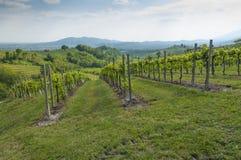 Vista de vinhedos de Prosecco de Valdobbiadene, Itália Fotografia de Stock