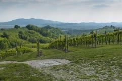 Vista de vinhedos de Prosecco de Valdobbiadene, Itália Imagem de Stock Royalty Free
