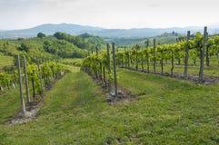 Vista de vinhedos de Prosecco de Valdobbiadene, Itália durante o spri Imagem de Stock
