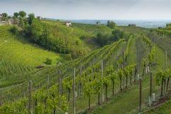 Vista de vinhedos de Prosecco de Valdobbiadene, Itália durante o spri Fotografia de Stock
