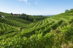 Vista de vinhedos de Prosecco de Valdobbiadene, Itália durante o summ Fotos de Stock Royalty Free