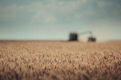 Vista Defocused del harvesti della macchina di agricoltura della mietitrebbiatrice Fotografia Stock Libera da Diritti
