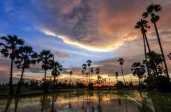 Vista degli alberi della palma da zucchero della siluetta al tramonto Fotografia Stock