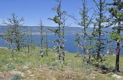 Vista degli alberi e del lago Baikal sull'isola Immagini Stock