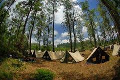 Vista degli alberi e dell'accampamento alla foresta Immagine Stock Libera da Diritti
