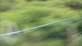 Vista degli alberi e dell'ambiente da una finestra del treno ad alta velocità rapidamente andante stock footage
