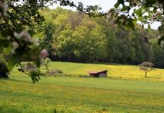 Vista degli alberi e delle colline attraverso i fiori della molla che fioriscono sull'albero immagini stock