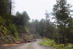 Vista degli alberi forestali, strada della montagna fotografie stock libere da diritti