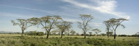 Vista degli alberi nel Serengeti Fotografie Stock