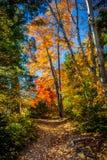 Vista degli alberi variopinti durante la stagione di autunno Immagini Stock Libere da Diritti