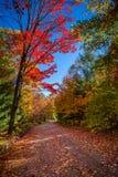 Vista degli alberi variopinti durante la stagione di autunno Immagine Stock Libera da Diritti