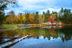 Vista degli alberi variopinti durante la stagione di autunno Fotografie Stock