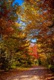 Vista degli alberi variopinti durante la stagione di autunno Fotografia Stock Libera da Diritti